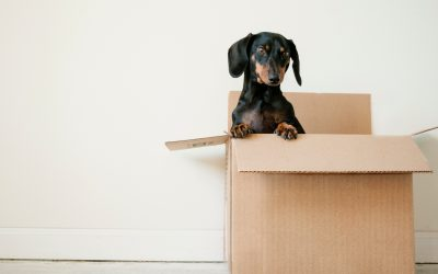 Moving Box Guide